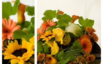 FW - Autumn (4b)